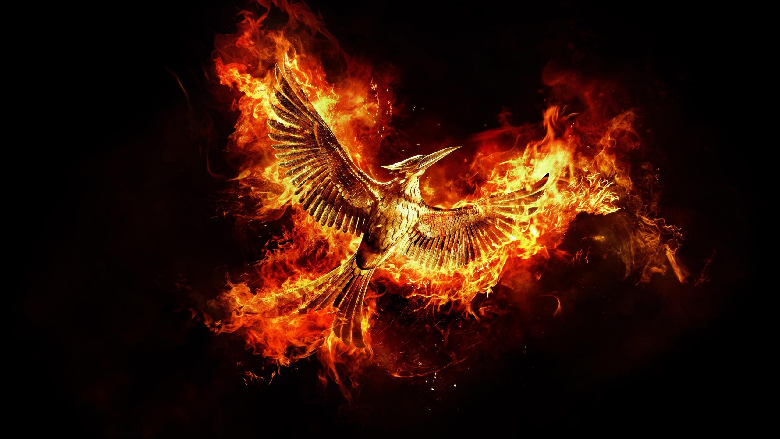Картинки птица Феникс Фантастика Пламя Черный фон 2560x1440 Птицы Фэнтези Огонь на черном фоне
