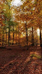 Фотография Осень Леса Дерево Лист