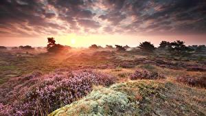 Фотография Рассветы и закаты Небо Луга Облака Heather Flowers Природа