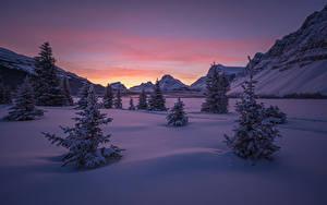 Фото Канада Парки Зима Горы Рассветы и закаты Банф Снеге Ели Природа