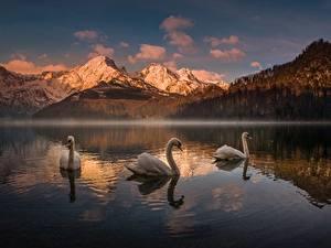 Картинка Горы Озеро Лебеди Австрия Almsee Природа