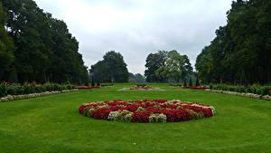 Картинка Нидерланды Сады Бегония Газон Дерево Кустов Garden De Haar Castle Природа