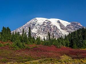 Картинки США Парк Горы Лес Снег Mount Rainier National Park, Mount Rainier, Washington state