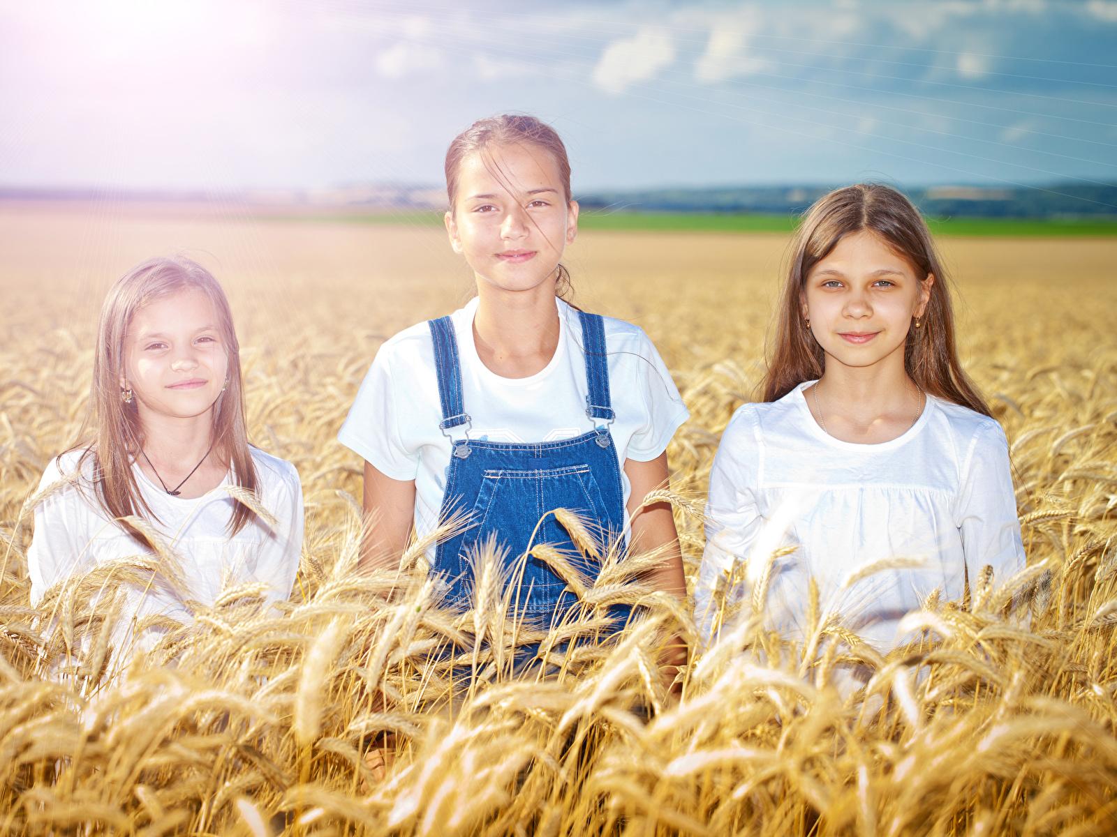 Картинки Девочки ребёнок Поля колоски три 1600x1200 девочка Дети Колос колосья колосок Трое 3 втроем