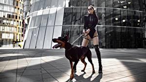 Фотография Собаки Доберман Ног Красивая Фотомодель Поза Yuri Semenov молодые женщины Животные