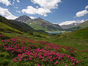 Картинка Франция Пейзаж Рододендрон Горы Холмов Облако Savoie Природа
