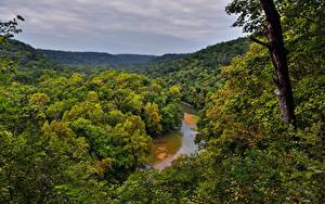 Фотография США Парки Леса Реки Ствол дерева Mammoth Cave National Park Природа