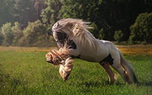 Фотографии Лошадь Бегущая Трава Животные
