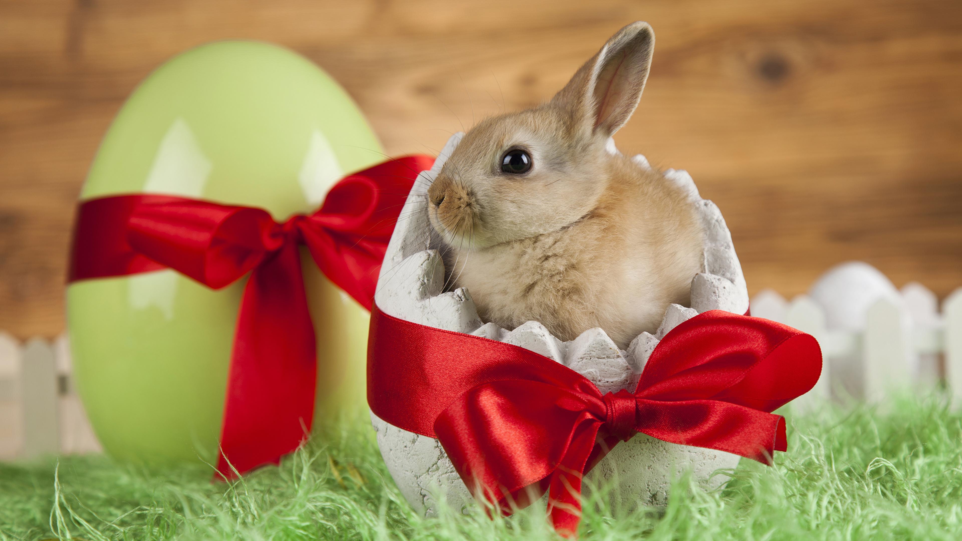 Картинки Пасха Кролики Детеныши Яйца Бантик животное 3840x2160 яиц яйцо яйцами бант бантики Животные