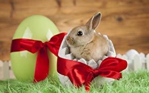 Картинки Пасха Кролики Детеныши Яйца Бантик Животные