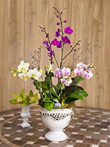 Обои Орхидеи Доски Вазы цветок