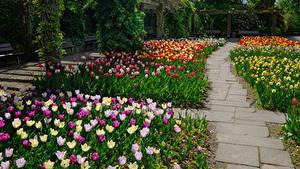 Фото Германия Сады Тюльпаны Botanischer Garten Solingen Природа