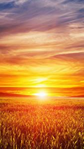 Фото Пейзаж Рассвет и закат Поля Небо Солнце Природа