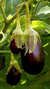 Фотография Овощи Крупным планом Пища