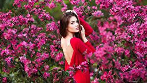 Фотография Цветущие деревья Шатенки Спины Смотрят Девушки