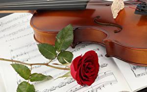 Картинка Скрипки Ноты Роза Красная цветок