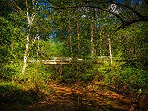 Фотографии Штаты Леса Реки Мосты Калифорния Деревья Walnut Creek Природа