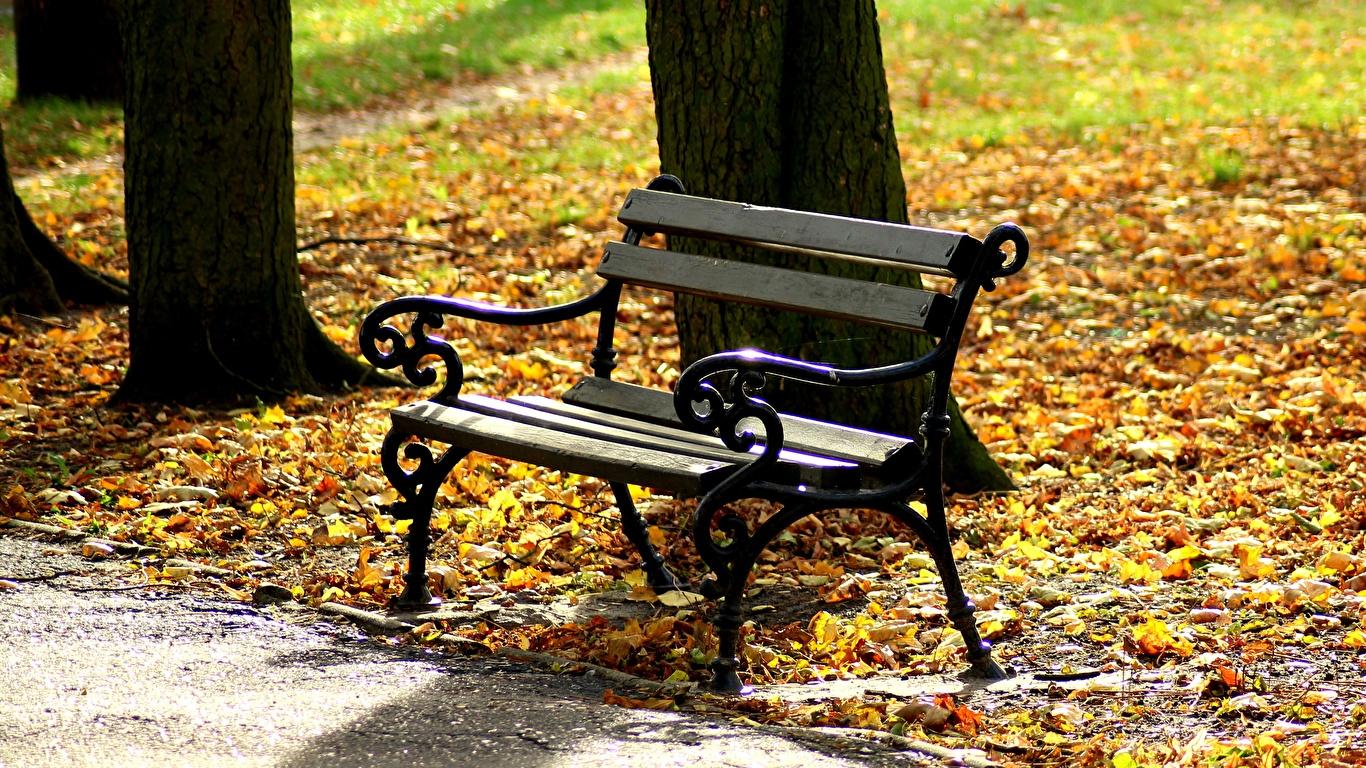 Картинка Листва Осень Природа Скамья 1366x768 лист Листья осенние Скамейка