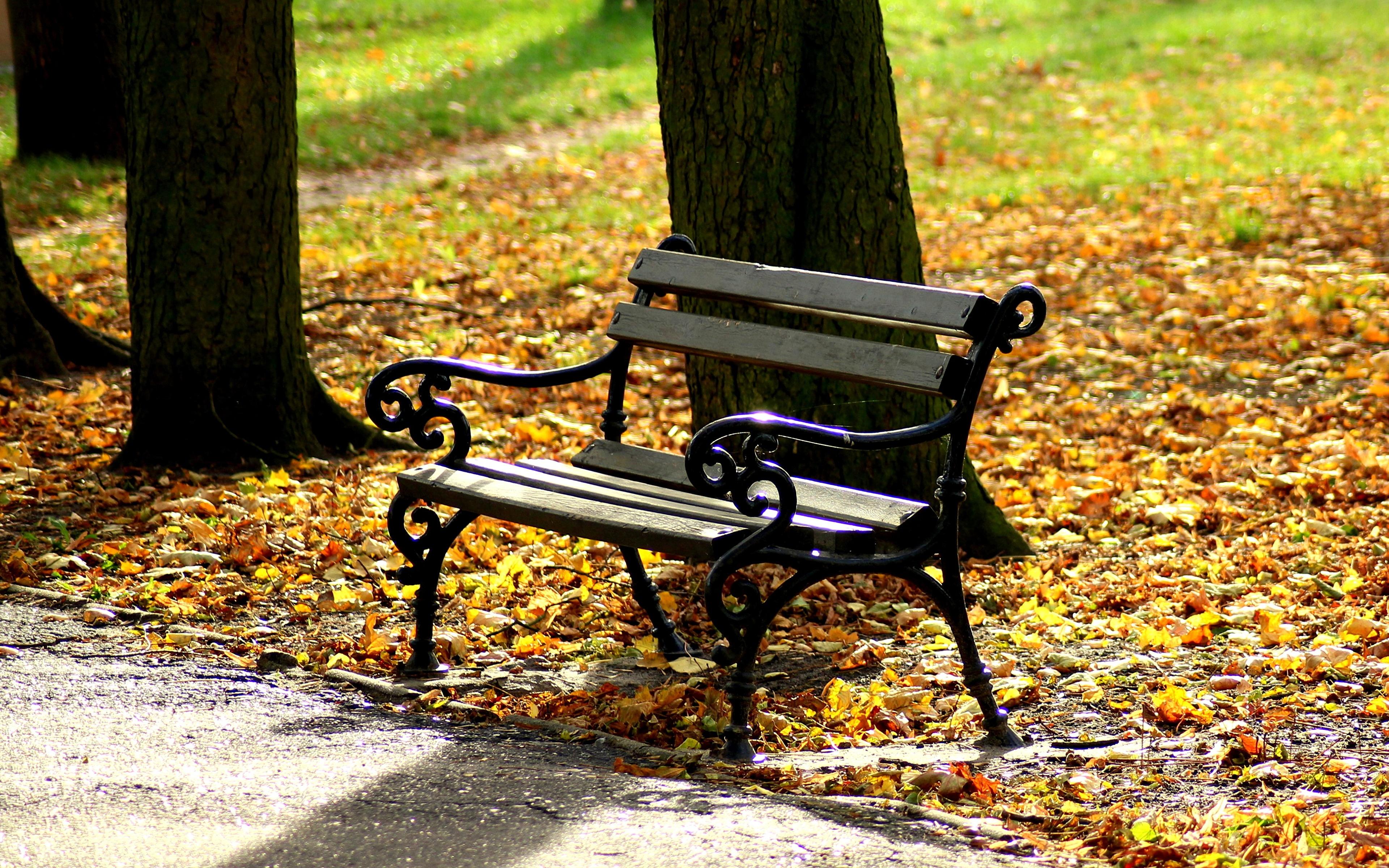 Картинка Листва Осень Природа Скамья 3840x2400 лист Листья осенние Скамейка