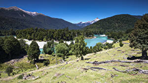 Картинки Чили Горы Лес Река Дерево Patagonia Природа