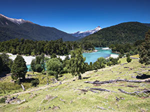 Картинки Чили Горы Лес Река Дерево Patagonia