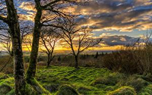 Картинки Великобритания Рассветы и закаты Деревья Трава Мха Облака Toor Northern Ireland Природа