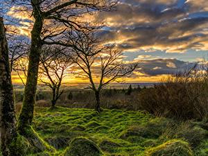 Картинки Великобритания Рассветы и закаты Деревья Трава Мох Облака Toor Northern Ireland Природа