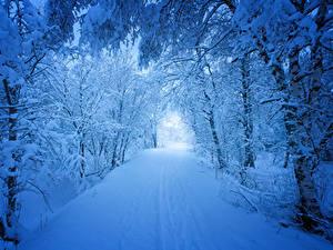Фото Сезон года Зима Лес Дороги Снег Дерево