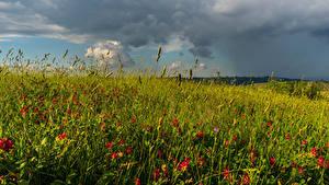 Фото Поля Лето Трава Природа