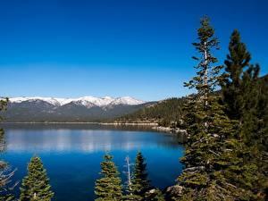 Фотография Гора Озеро Лес Пейзаж Америка Калифорнии Lake Tahoe