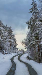 Обои Норвегия Зимние Леса Дороги Снег Rogaland Природа