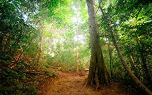Картинки Тропики Леса Ствол дерева jungle