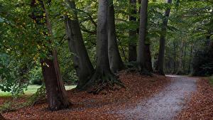 Фото Нидерланды Парки Осенние Деревья Листва Graaveland