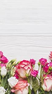 Обои Розы Шаблон поздравительной открытки цветок
