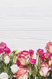 Обои Роза Шаблон поздравительной открытки