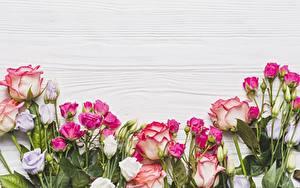 Обои Розы Шаблон поздравительной открытки