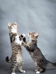 Фотографии Коты Котята 2 Животные