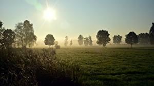 Картинка Рассветы и закаты Луга Траве Деревья Тумане Солнца