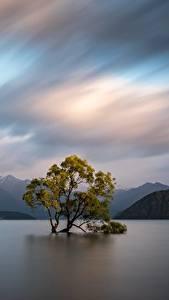 Картинка Новая Зеландия Горы Вода Деревья Облачно Wanaka, Otago