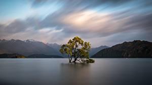 Обои для рабочего стола Новая Зеландия Горы Вода Деревья Облачно Wanaka, Otago Природа