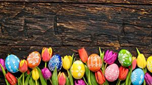 Фотография Пасха Тюльпаны Доски Яйца Разноцветные Цветы