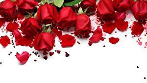 Картинки Роза День всех влюблённых Красные Лепестки Шаблон поздравительной открытки цветок