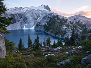 Картинки Америка Парк Гора Озеро Камни Траве Ели Mount Rainier National Park Cyclone Lake Природа