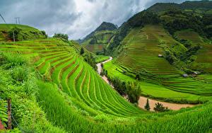 Фотографии Вьетнам Горы Поля Речка Трава