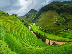 Фотографии Вьетнам Гора Поля Реки Траве