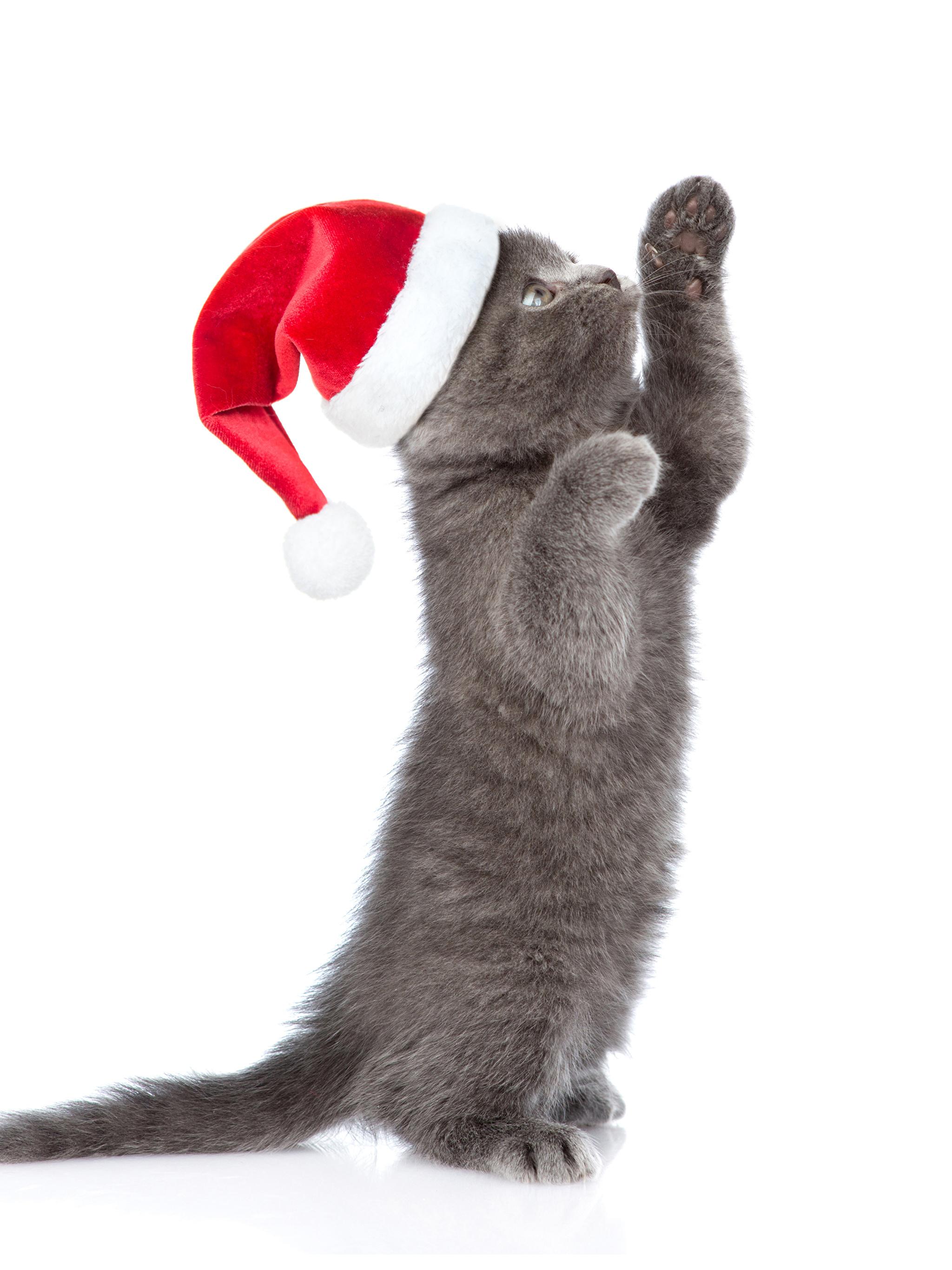 Новогодние Обои На Телефон С Животными Вертикальные