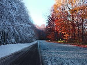 Картинка Осень Дороги Зимние Деревья Снег