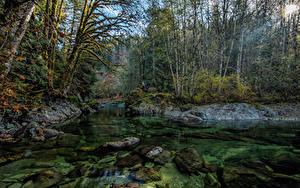 Фото Канада Леса Река Камень Мох Лучи света Little Nitinat River Природа