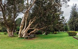 Фотография Шри-Ланка Тропики Парк Дерева Газон Скамейка Nuwara Eliya Queen Victoria Park Природа