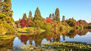 Фотография Англия Осенние Парки Пруд Деревья Листья Sheffield Park Природа